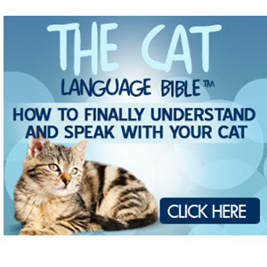 Cat Language Bible Review