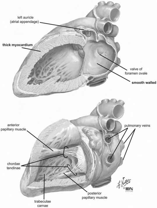 Left Ventricle Orientation