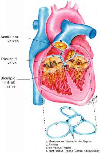 Lotus Edge Heart Valve